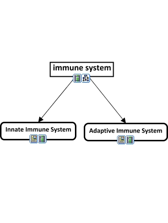 Adaptive Immunity Concept Map.Components Of The Immune System Html